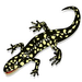 Mrs Kellinger's Class Salamander Stride Team