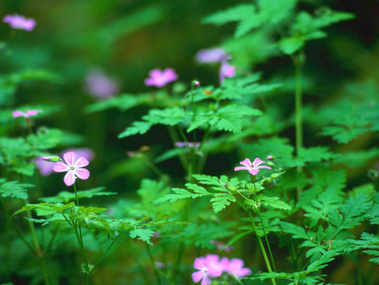 Size_550x415_forest%20flowers