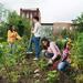 Size_75x75_community-garden