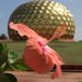 Support Auroville the International Community dedicated to Human Unity