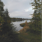 Preserve Protect and Responsibly Enjoy the Cloquet Valley State Forest.