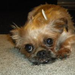 Help dogs like Paris from puppy mills here in WI