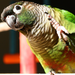 Endangered Parrots of the World