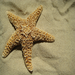The Starfish, famous for an ability to regenerate limbs, embodies the strength and resiliency of the children we serve.