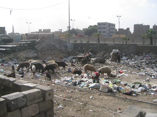 Size_550x415_egypt