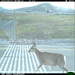 During the Spring and Fall migration periods, many more animals will be crossing our roadways.  We need safe crossings.