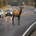 Reduce your vehicle speed from dusk to dawn; help us reduce human injuries and property damage and save wildlife.