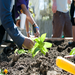 Planting at the Washington Youth Garden