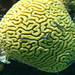 Learn how WRI is helping coral reefs: http://bit.ly/sPuVug