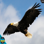 Give to the Max Day - National Wildlife Federation, Chesapeake Bay Wildlife