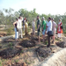 Reforestation at Sadhana Forest