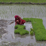 Women's Farming Cooperative