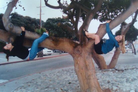 Size_550x415_tree