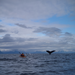 Amy Freeman photographs Dave Freeman with Humpback Whales in Alaska.