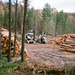 Logging in a Wildlife Area in the Black Hills