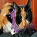 Mardi Gras Mambo, the fabulous cat for whom the Purr Memorial Fund was named.