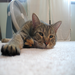 My cat Simon was adopted from the Humane Society for Greater Nashua in 2005. I'm raising money to help the pets there.