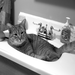 Like many cats at the shelter, Simon loves to relax in a sink. The shelter cares for over 1,500 cats every year!