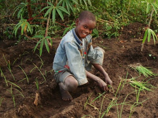Size_550x415_permaculture-boy