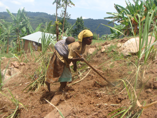 Size_550x415_dsc09825%20%28this%20is%20a%20woman%20from%20the%20batwa%20community%20found%20%20digging%29