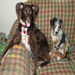 Ripken (L) is an SHS alum transported to the Greater Androscoggin Humane Society in Maine and now lives with pal Drake.