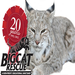 Windsong the bobcat started the sanctuary