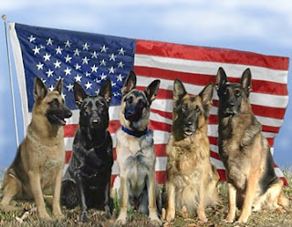 Size 550x415 military dogs