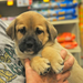 This puppy found a loving home thanks to All Paws Rescue