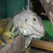 Like reptiles? We've got more than this iguana at the zoo!
