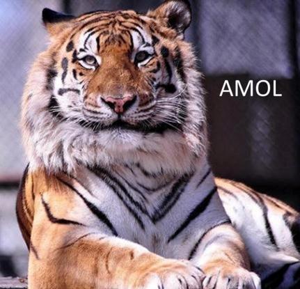 Size_550x415_amol