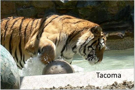 Size_550x415_tacoma