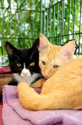 Size_550x415_kittens%20gray%20yellow