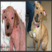 Bree first came to CARA covered in mange with little chance for survival but now she is a healthy, happy dog.