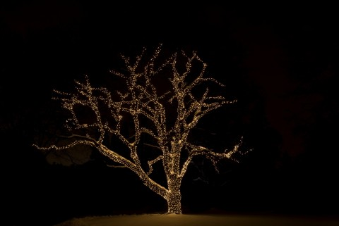 Size 550x415 tree%20with%20lights