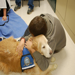 LCC K-9 Comfort Dogs Travel Expenses