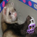 Ferrets make great friends!