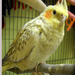 Dakin often has cockatiels, finches, doves, or parakeets available for adoption.