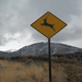 When you see this sign, stay alert since wildlife on the roadway is a frequent occurrence.