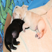 Yellow and black Lab pups snuggle together from Molly's litter.