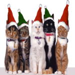 Tis' the season to give to homeless kitties!