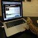 One of our mascots, Charles Darwin the Bearded Dragon, working hard!