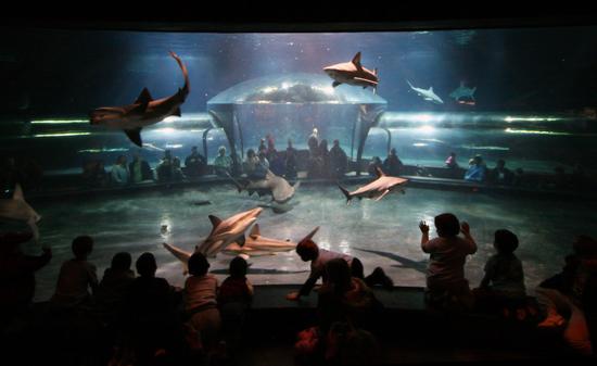 Size_550x415_shark%20view%2003
