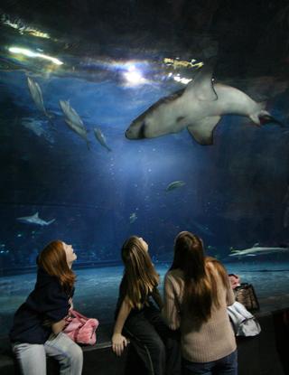 Size_550x415_shark%20tunnel%2004