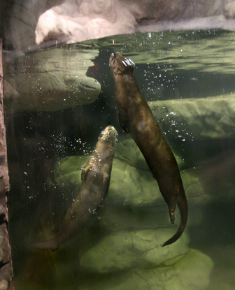 Size_550x415_otters2