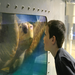 A sneak preview of the Sea Turtle Experience! Please help finish a new home for our two Loggerhead sea turtles.
