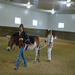 This team demonstrates loss of contact from the long lines in a hippotherapy treatment session.