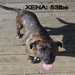 Our beautiful Xena now weighing 53 lbs, followed by heartworm treatment and now in her forever home!