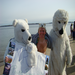 Pete with his polar bear buddies, getting ready for a plunge into Casco Bay.  Ready to do it again!!