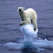 Climate change doesn't only impact polar bears!