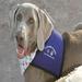 Gabriel, Founding Dog